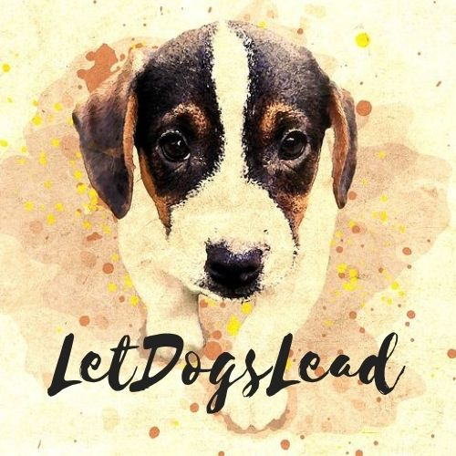 Let Dogs Lead
