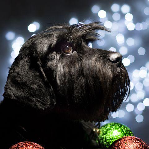 New Year Same Dog